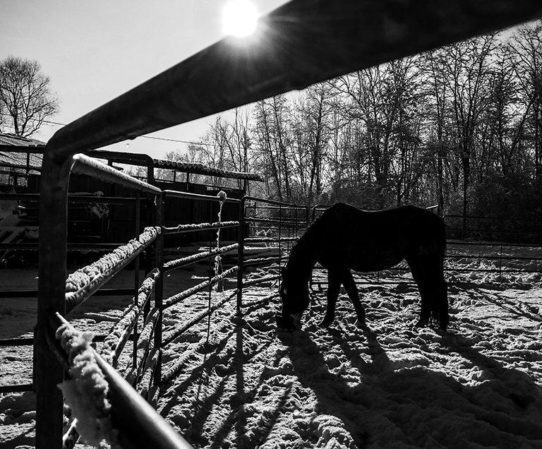 black horse, white snow